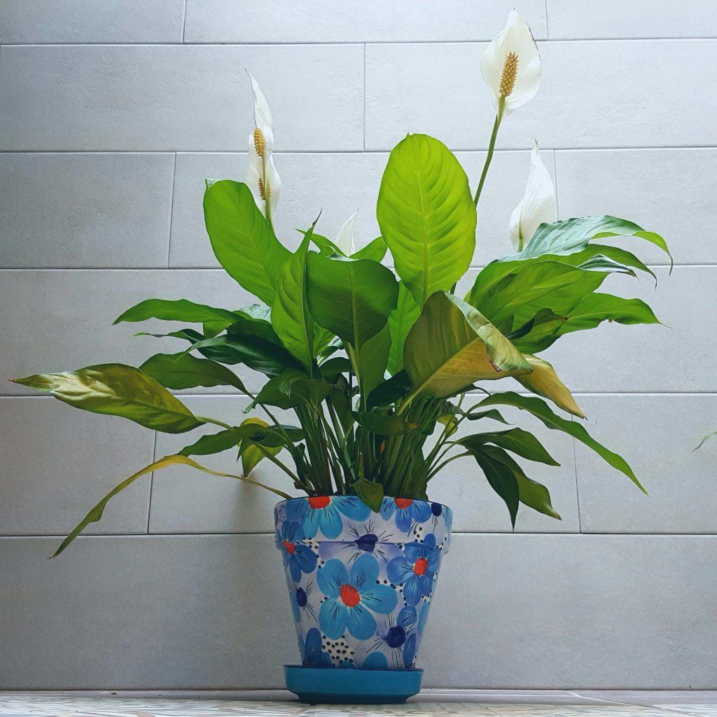 maceta flor cerámica jardín